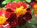 1316 - Zell am See - Flower.JPG