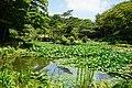 170811 Rokko Alpine Botanical Garden Kobe Japan06n.jpg