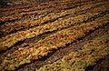 175Zypern Wein (14082538026).jpg