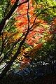 191123 Settsu-kyo Gorge Takatsuki Osaka pref Japan01s5.jpg