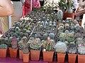 2010. Выставка цветов в Донецке на день города 126.jpg