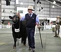 2013 Royal Melbourne Show (9972371476).jpg