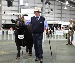 Royal Melbourne Show - Cows on show