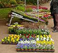 2015-10-17 11-04-56 marche-plantes-belfort.jpg