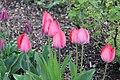 2016-04-17 Tulpen.jpg