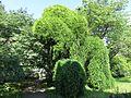 20170527 Basel Botanische Garden.jpg