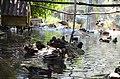 2019-08-10. Зоопарк в Придорожном 067.jpg