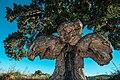 2019 The bird-tree FR.jpg