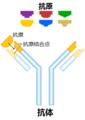 255px-Antibody-zh-cn.png