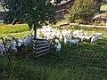 3683 Yspertal, Austria - panoramio.jpg