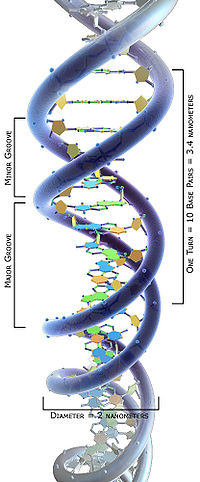 3DScience DNA structure labeled a.jpg