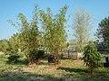 43Lubao Bamboo Hub & Eco-Park Santa Catalina Pampanga 20.jpg
