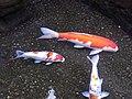 5 Chome Obi, Nichinan-shi, Miyazaki-ken 889-2535, Japan - panoramio (6).jpg