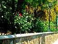 A@a Apliki village Nicosia Cyprus - panoramio (13).jpg
