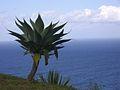 Açores 02.jpg