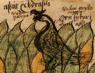 Veðrfölnir and eagle - An illustration from a 17th-century Icelandic manuscript shows a hawk, Veðrfölnir, on top of an eagle on top of a tree, Yggdrasil.