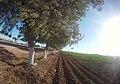 ARBOLITOS - panoramio (1).jpg