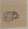 A Cat Curled Up, Sleeping MET 1995.493.jpg
