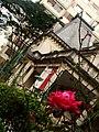A Rosa e a Casa Casa das Rosas.jpg