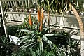 A Visit To the Botanic Gardens In Glasnevin (5469923706).jpg