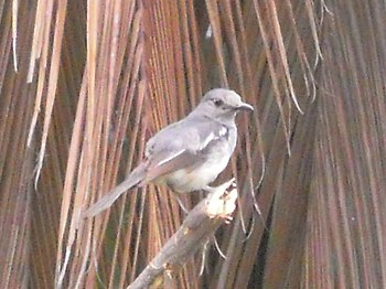 A brown bird - Identity unknown.jpg