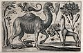 A camel surrounded by various named animals, flowers and ins Wellcome V0044041.jpg