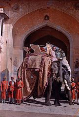 A decorated elephant awaits the Maharaja of Jaipur by Franklin Price Knott.jpg