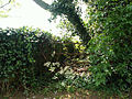 A hedgerow in Honington, Lincolnshire, England, on Main Street oposite church 02.jpg
