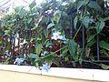 A identificar floracion nocturna (1).JPG