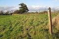 A new hedge near Ford Farm - geograph.org.uk - 1567681.jpg