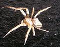 Ab spider 002.jpg