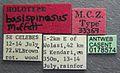 Acanthomyrmex basispinosus casent0178574 label 1.jpg
