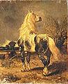 Achille Giroux Percheron dans un pâturage.jpg