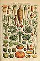 Adolphe Millot legume et plante potageres-pour tous.jpg