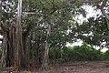 Al lado de Pasacaballo - panoramio.jpg