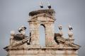 Alcalá de Henares (RPS 08-02-2014) cigüeñas blancas en la espadaña de la Capilla de San Ildefonso.png