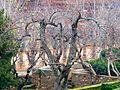Alhambra, Partal, Persimmons (4392436057).jpg