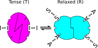 Jean-Pierre Changeux - Diagram representing an allosteric transition of a protein between R and T states, stabilised by an Agonist, and Inhibitor and a Substrate. Adapted from Changeux and Edelstein (2004) Nicotinic Acetylcholine Receptors: From Molecular Biology to Cognition.