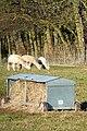 Alpacas at Goring Heath - geograph.org.uk - 1166848.jpg