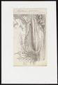 Amphiuma didactylum - 1700-1880 - Print - Iconographia Zoologica - Special Collections University of Amsterdam - UBA01 IZ11400189.tif