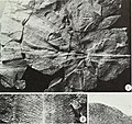 An Early Pennsylvanian flora with megalopteris and noeggerathiales from west-central Illinois (1977) (21096729036).jpg