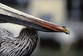 An amazing bird.jpg