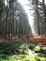 An overgrown woodland track - geograph.org.uk - 1198910.jpg