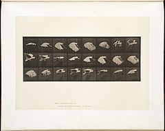 Animal locomotion. Plate 759 (Boston Public Library).jpg