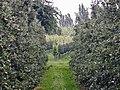 Apfel und Wein - panoramio.jpg