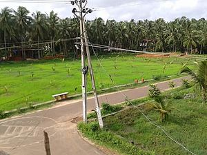 Tanur, Malappuram - Tanur countryside
