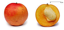 Apple mango and cross section edit1.jpg