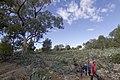 Apsley NSW 2820, Australia - panoramio (40).jpg