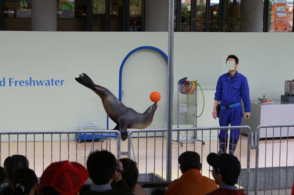 Aqua totto Gifu Sea Lion Show