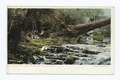 Arbor Vitae Trees and Cascades, Natural Bridge, Va (NYPL b12647398-67826).tiff